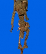 Decaying Skeleton