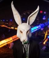 Raverabbit