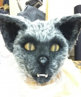 Gray Cat head