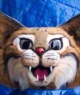 Bernie Mac Bob Cat Mascot Costume